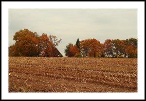 Schuppen in LandschaftSchuppen in LandschaftIpweger Moor Bauernhaus2.jpg