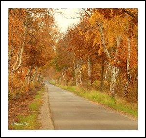Schuppen in LandschaftBirkenalleeIpweger Moor Birkenallee2 bzw.3 beschnitten.jpg