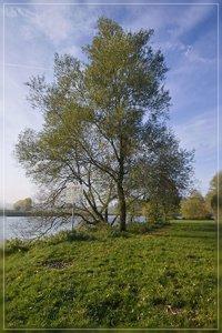 Ruhrwiesen-SD10 - IMG09385.jpg