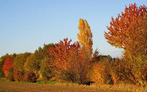 Bäume 034 A3.jpg
