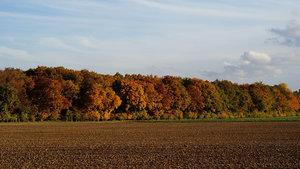 Wald 007 A3.jpg