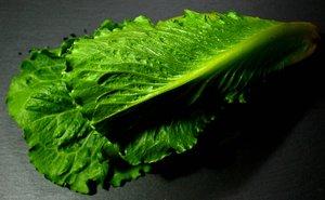 comp_salarico grün 2.jpg