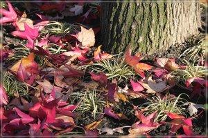 Herbst-IMG03155.jpg