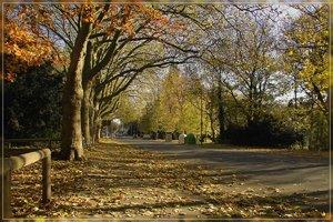 Herbst-IMG03189.jpg