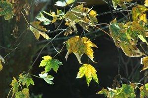comp_herbst bäume balkon.jpg
