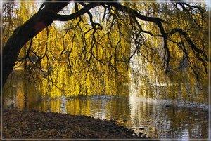 Herbst-IMG03148.jpg