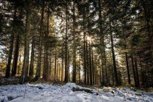 Zuflucht Wald.jpg