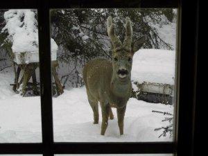 Heinrich schaut durchs Fenster.jpg
