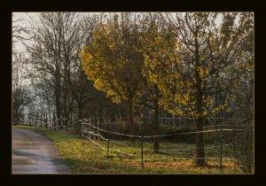 Herbst 10 025GROSSBLDFOR.jpg