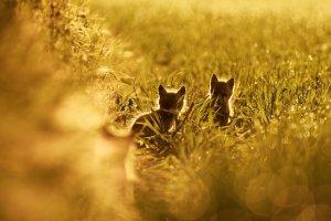 Fuchswelpen 3.jpg
