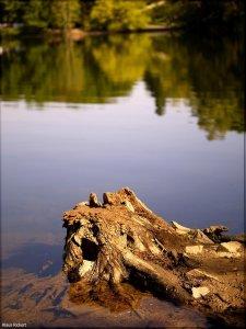 Bild - 1.jpg