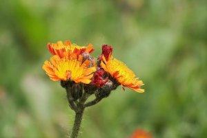 Blüte2.jpg