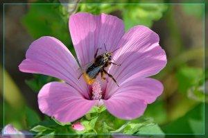 pollen_kR.JPG