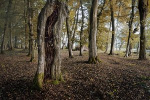 Wald oktober.jpg