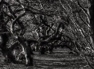 suentel-schwarzweiss.jpg