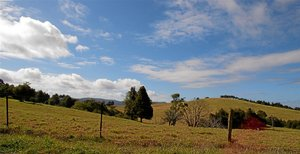 Sealy Lookout 5.jpg