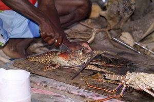 lobster_2.jpg