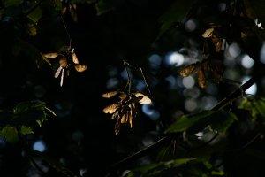 Forum DSC05111 Nex 5r + Viv CF 2,8 135mm©PPf.jpg
