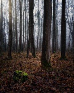 Marlen Wald 2.jpg