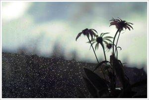 Regentag.jpg