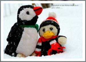 Pinguine unter sich....Pinguine unter sich.....jpg