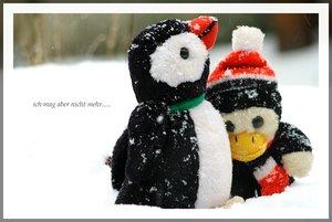 Pinguine unter sich....Pinguine aneinander geschmiegt.jpg