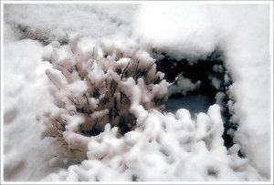 Neuschnee.jpg