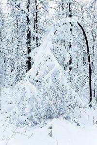 winter2010-_DSC0564.jpg