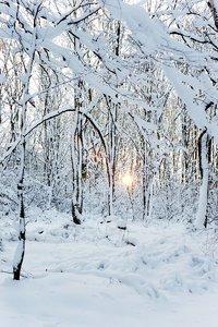 winter2010-_DSC0590.jpg