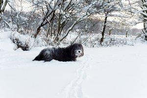 winter2010-_DSC0605.jpg