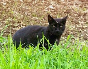 Katze01.jpg