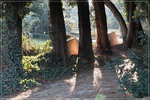 Friedhof-SD15 - SDIM2405.jpg