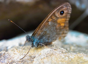 -Schmetterling- 1.jpg