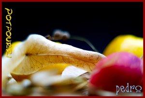potpourrie6.JPG