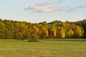 Herbstwald_2.jpg