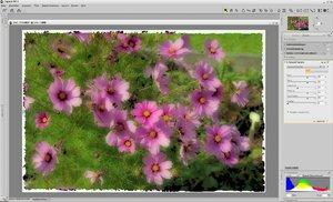 c_polaroid.jpg