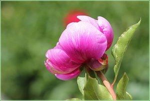 Blumen01.jpg