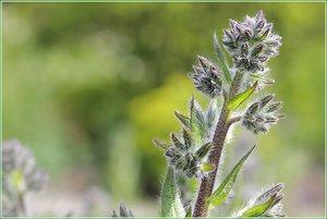Blumen02.jpg