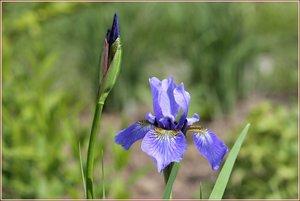 Blumen03.jpg