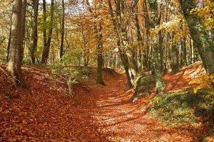 Waldweg_01.jpg