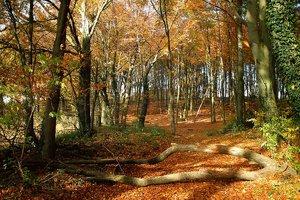 Waldweg_02.jpg