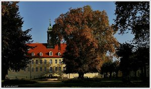 Herbst_gum2.jpg