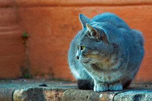 -Die Katze-.jpg