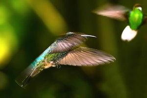 Kolibri-10.jpg