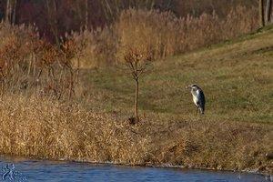 Muellersee08050212.jpg