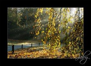Herbst-001.jpg