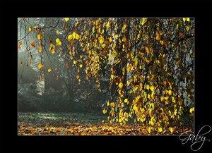 Herbst-002.jpg