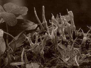 mit darkroom_0018.jpg