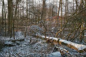 Winter09-SD1 - SDIM1333.jpg