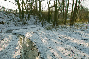 Winter09-SD14 - SDIM3215.jpg